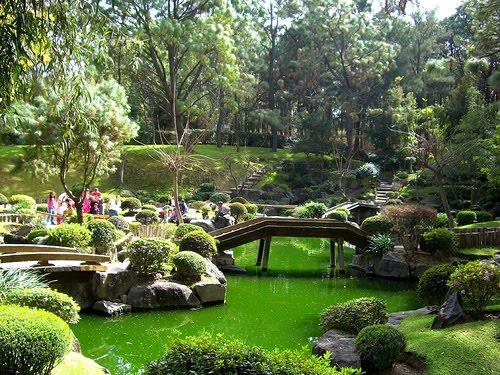 Plantas de jardin japones blogdepelusita for Arboles para jardin japones