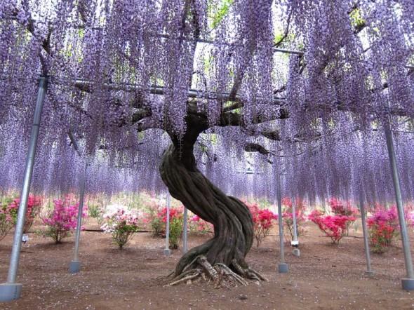 Jardín Kawachi Fuji